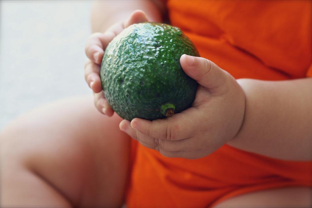 avocado-1476494_1920